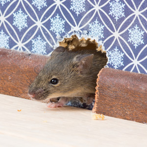 mouse exterminator franklin tn