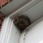 wasp control franklin nashville tn