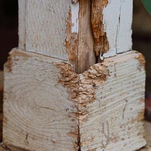 Termite Inspections Franklin TN