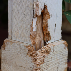 termite inspections in spring hill tn