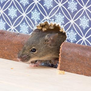 mouse exterminator franklin tn