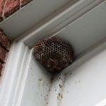wasp control franklin nashville tn