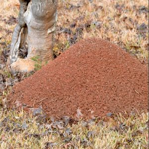 Pest Control for Fire Ants Spring Hill